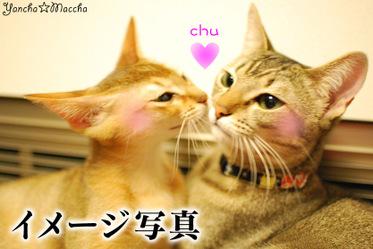 Chu2009